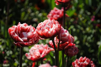 botanic_garden1(350x234)
